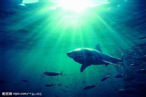 动物有哪些活动方法 海底动物的活动方式