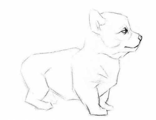 狗素描画法教程图片 简单易学步骤图教程